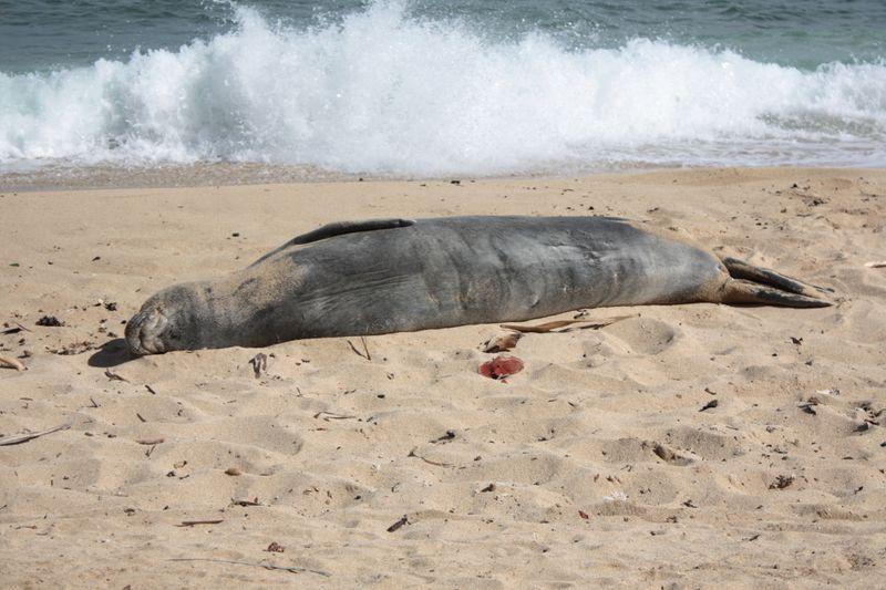 Seal 015