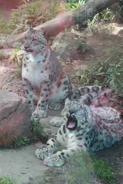 Philadephia Zoo 2014 - 117