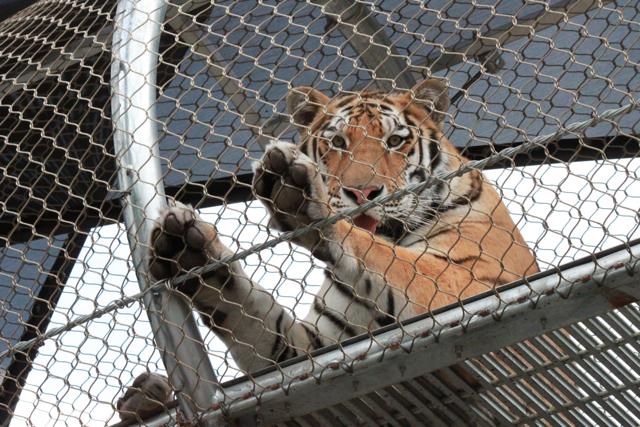 Philadephia Zoo 2014 - 131